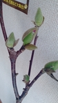 17-03-23-08-09-11-694_deco.jpg